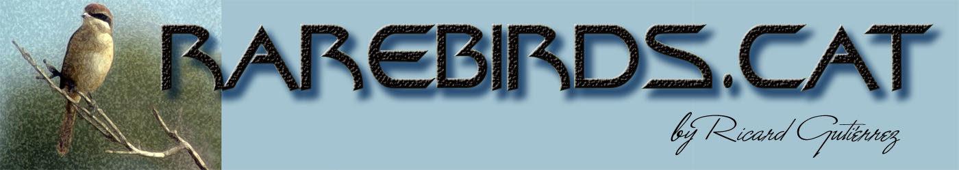 RareBirds.Cat