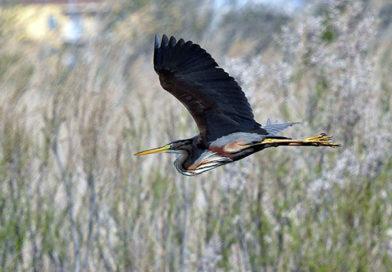 Birding hotspots: Torre d'en Dolça